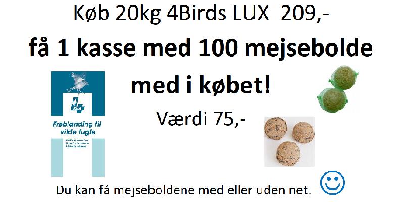 4birds lux tilbud