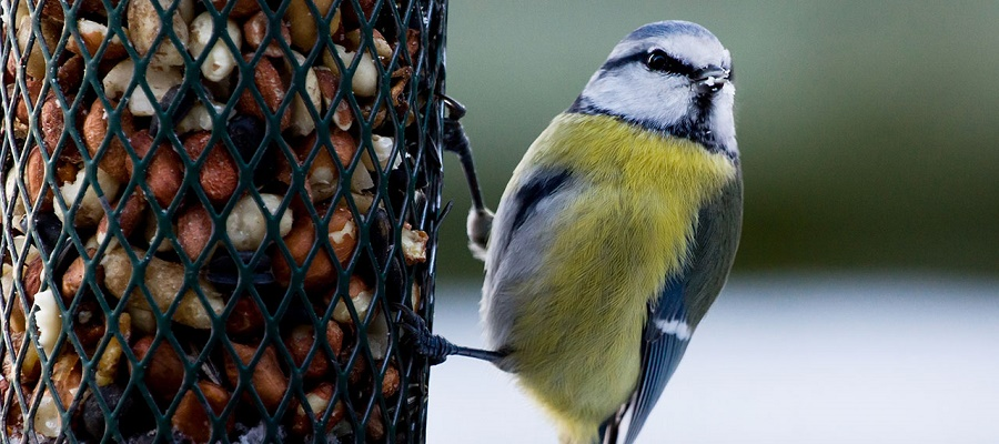 Vildfugl