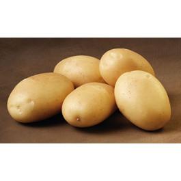 Ditta læggekartofler 1,5kg