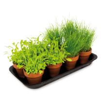 Fresh Green Mini Kokkenhav 8pt