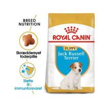 Jack Russel Puppy 1,5kg