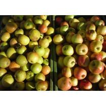 Æbler 1 ks ca 12,5kg