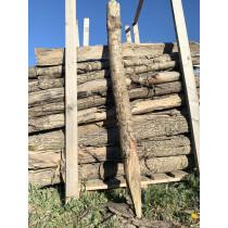 Egetræspæle 200cm
