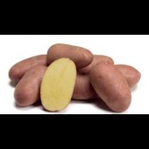 Aluette læggekartof. 25kg ØKO