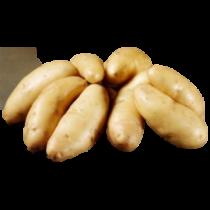 Asparges læggekartofler 1,5kg