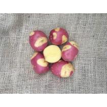 Celebration Læggekartofler 1,5