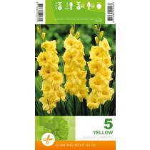 Gladioli Yellow