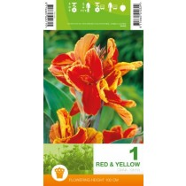 Canna Red & Yellow