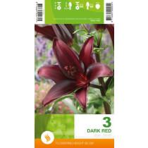 Lilje Dark Red  As