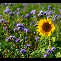 Blomster-& bestøverbrak 2år 10