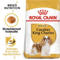 Cavalier KingCharles 1,5kg