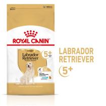 Labrador Retriever Adult 5+ 12