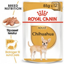 Chihuahua Adult WET 12x85gr