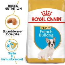 French Bulldog Puppy 10kg