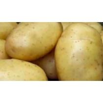 Tinca Læggekartofler ØKO afvej