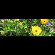 Blomstermarksbl.en&flerårig 1k