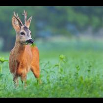 Vildtbl.10kg hjorte/hare/fugle